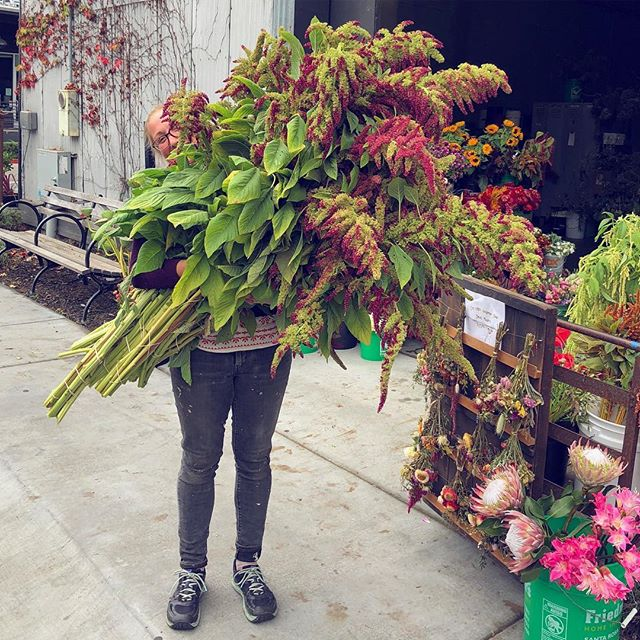 Fall is in full affect with all the amazing amaranthus varieties that have been making their way to the Mart these days 🧡 these stunning uprights are gonna go party at a wedding this weekend! #slowflowers #locallygrown #northbayflowercollective #bigflowers #edibleflowers @frontporchfarmer