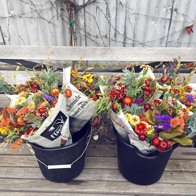 These fall market bouquets are just sittin' on a bench waiting to be bought up! Just kidding, they're at community market in Sebastopol and you should Cruz down and buy one before they sell out! #locallygrown #slowflowers #marketbouquet #communitymarketsebastopol