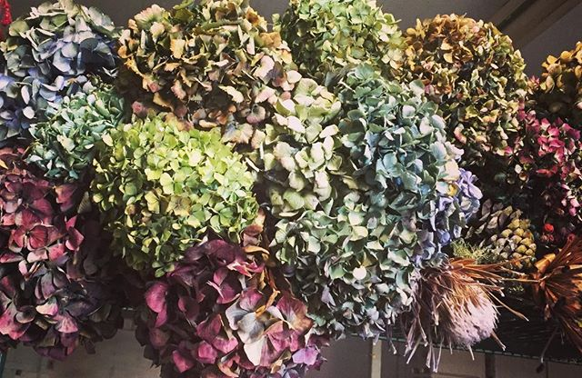 1.5 hrs left for Thanksgiving Pre-orders!  #slowflowers #holidayflowers #hydrangea #driedflowers