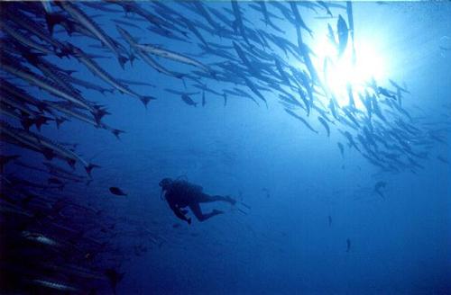 Debbie, scuba diving with Barracuda.