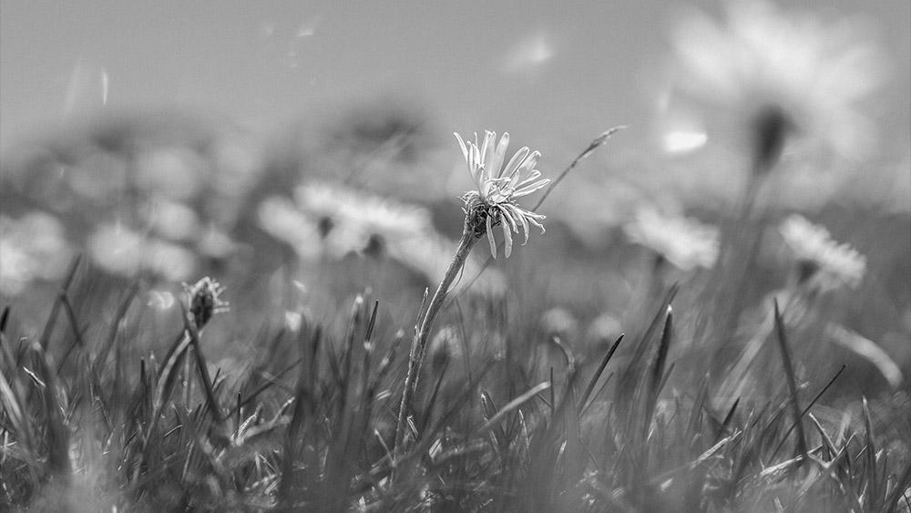 Spring / 35mm