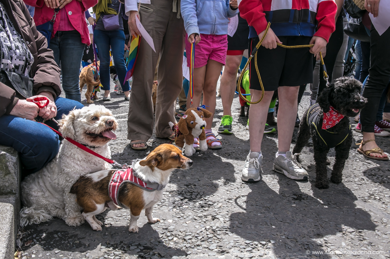 Pride and Stoneybatter Festival 2017-3470.jpg