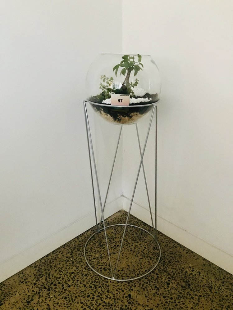 Double Ficus And Geometric Stand Adelaide Terrariums