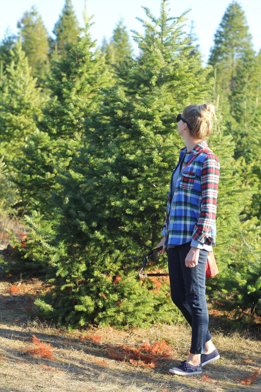 gilt edge | oh christmas tree