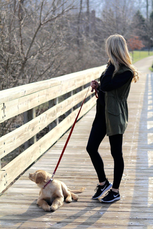 gilt edge | puppy training