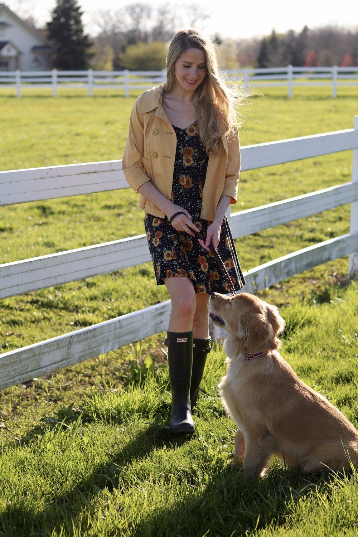 gilt edge | golden retriever puppy