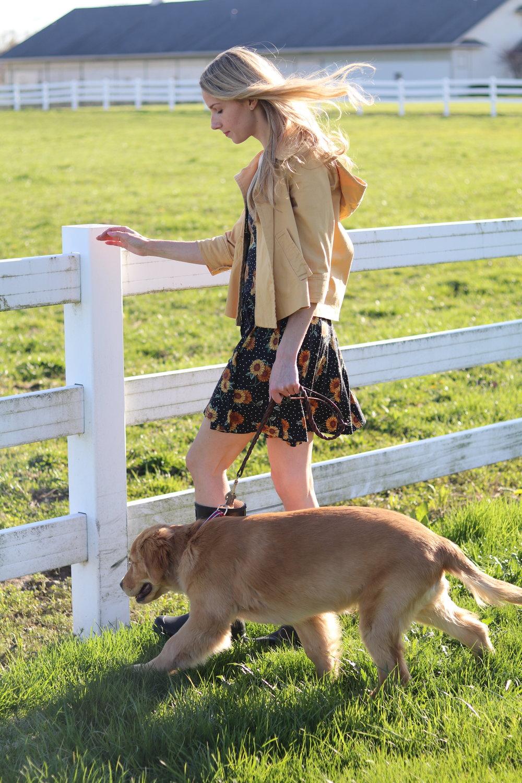 gilt edge | asos spring dress