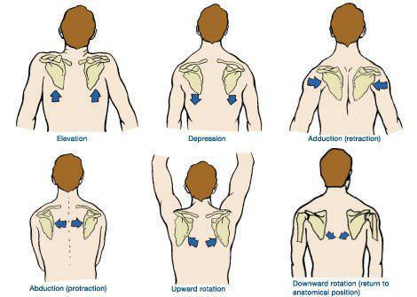 shoulder-scapular-motions
