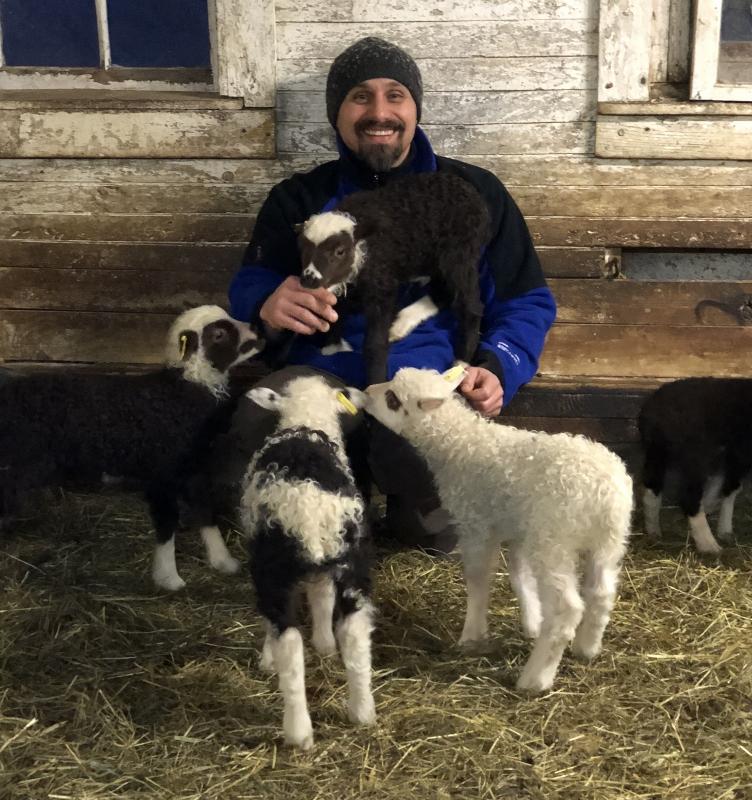 Rooz lambs (752x800).jpg