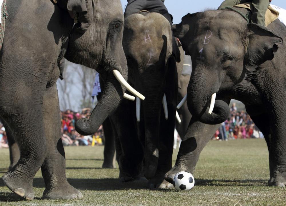 ElephantSoccer.jpg
