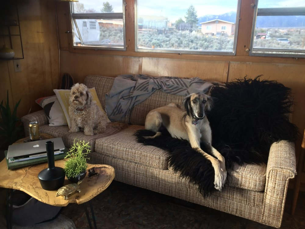 two of her four dogs