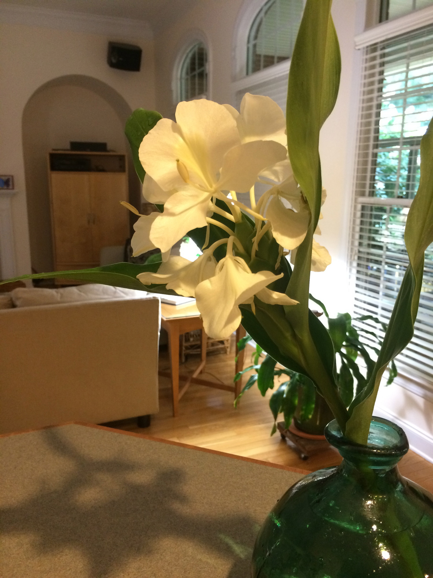 The Easiest Most Fragrant Cut Flower White Ginger Lily Stanleys