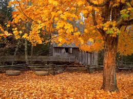 Fall: the best time to plant trees & shrubs