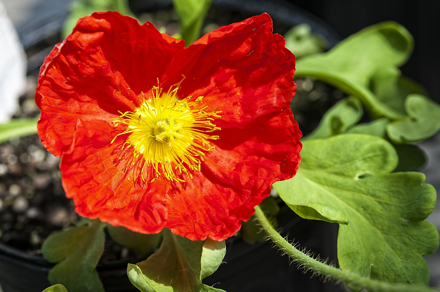 The greenhouse stanley - How To Protect Your Less Hardy Plants During A Mid To Late Spring Frost