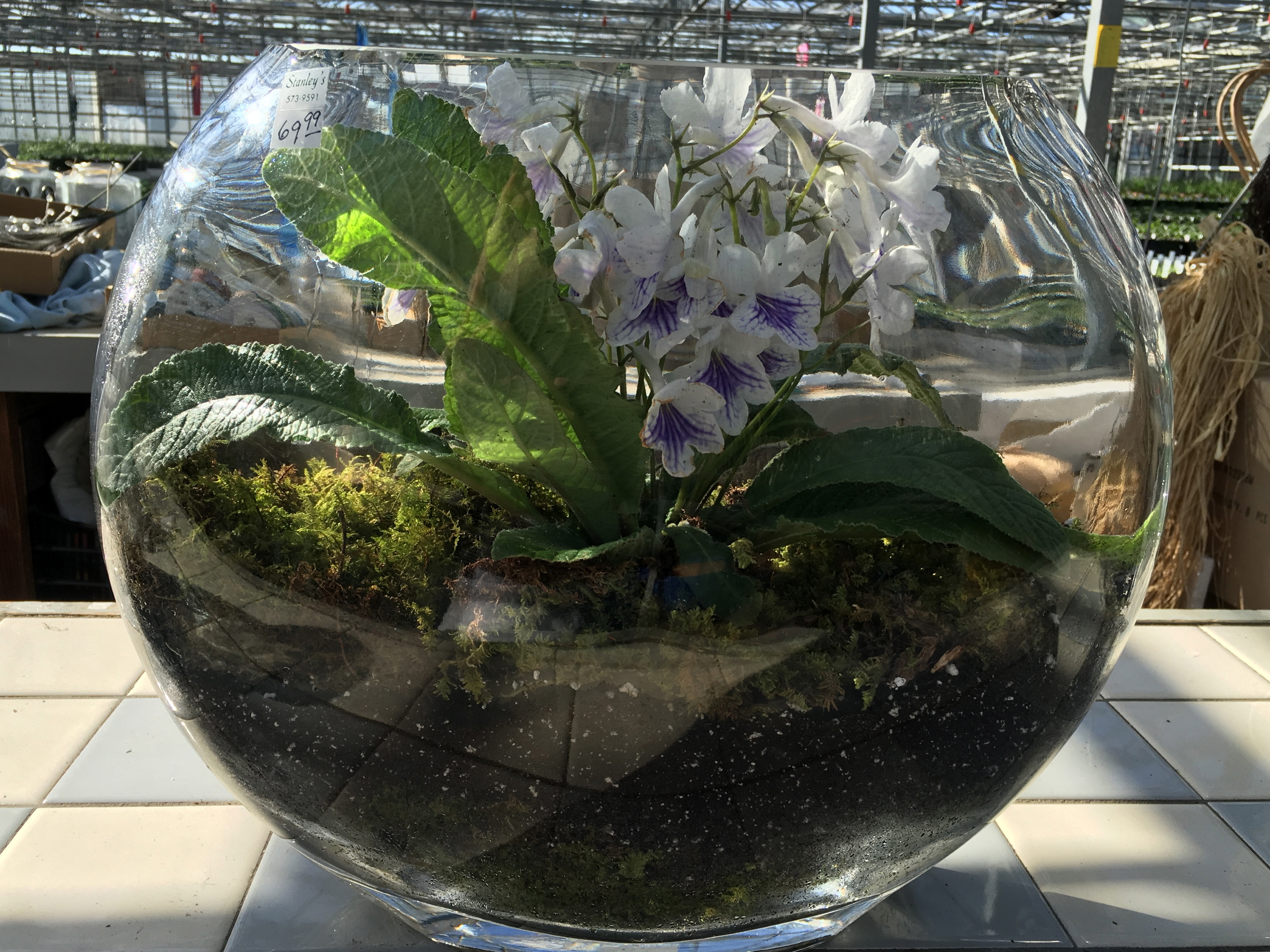 How To Make A Terrarium A Stylish Miniature Glass Garden Stanley S Greenhouse