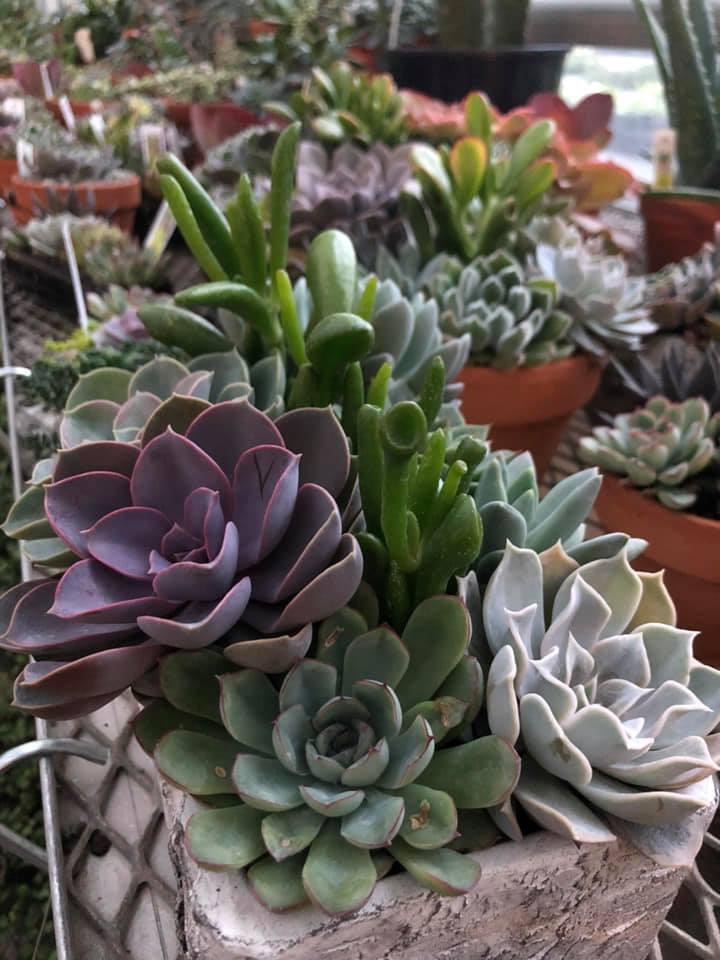 Diy Succulent Garden Workshop Stanley S Greenhouse