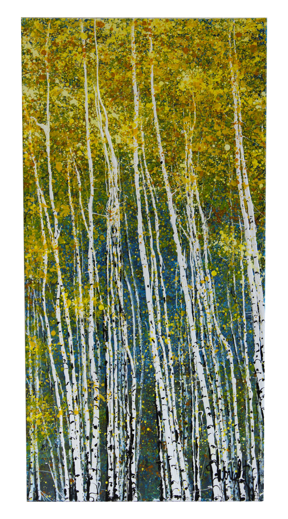 """Young Aspens. Independence Pass, CO   48x24"""""""