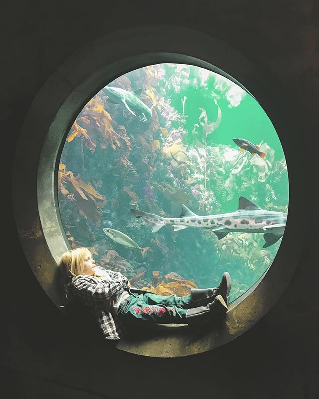 Yesterday we took our east coast family to Monterey. The history, aquarium, and of course the playground, makes it a must see.