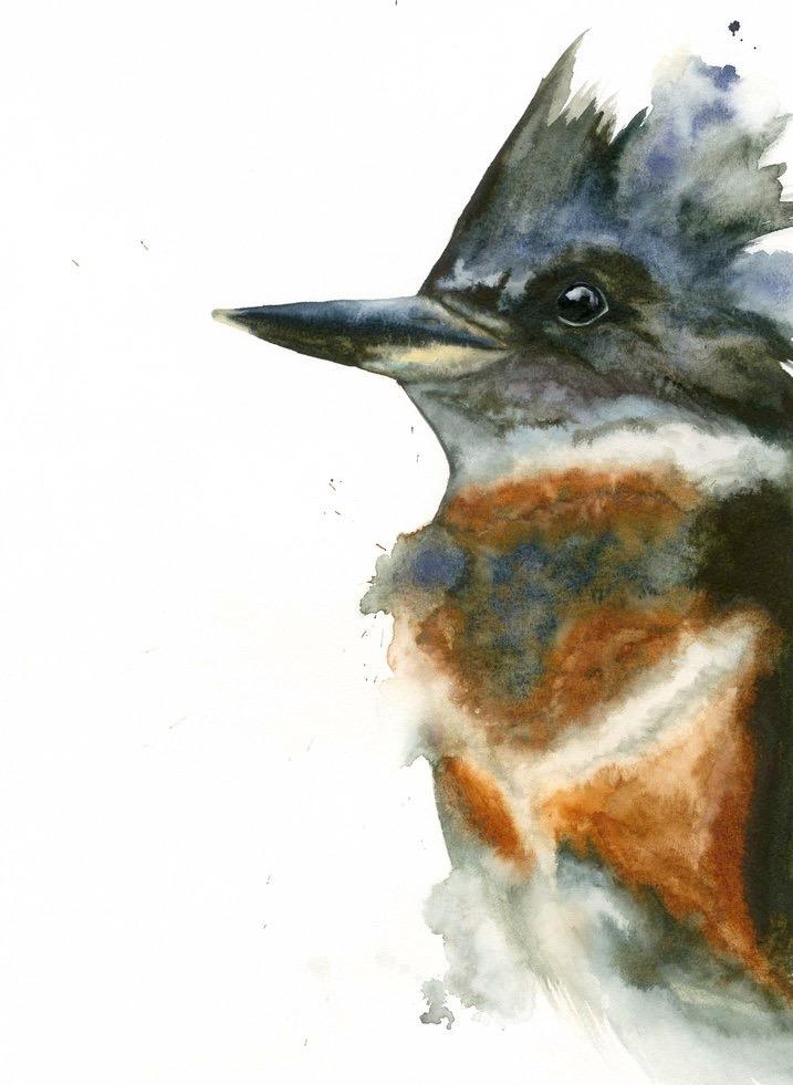 Kingfisher // Watercolor