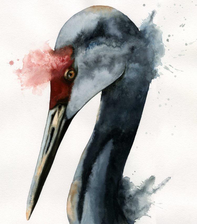 Sandhill Crane // Watercolor