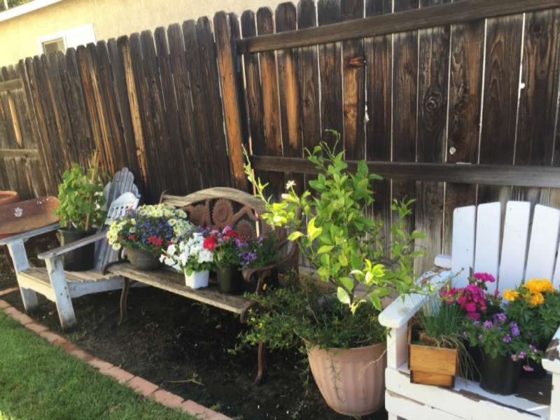 My Big Fat Cuban Family - Guide to Easy Container Gardening