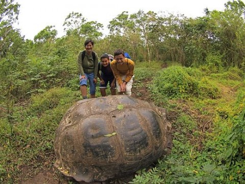 Land before time: Although it looks as if we're right on top of this giant land tortoise, we're really a healthy distance away. (It's important not to interfere with the natural activities of wildlife.)