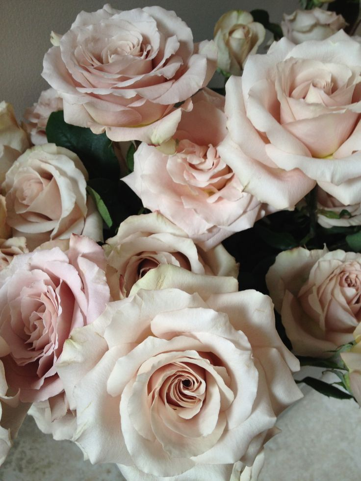 Blush roses...be still my heart.