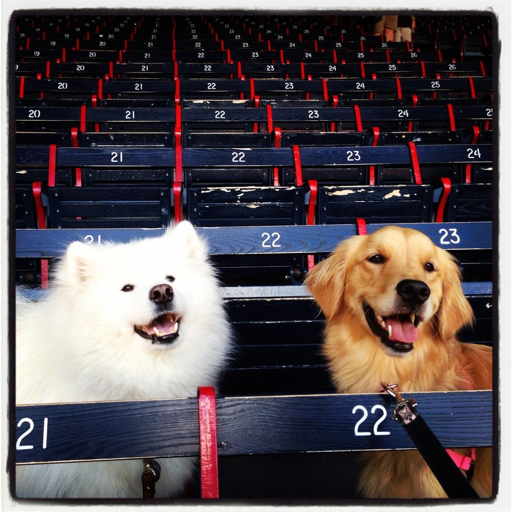 Fenway Park Grandstands