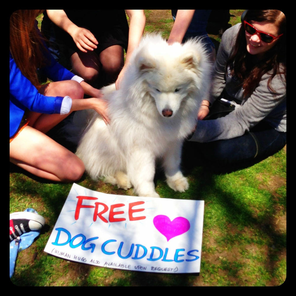 Free Dog Cuddles, Boston Common