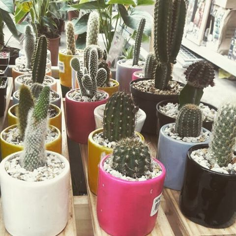 Comprando maticas con @dia_bla #cactus #energy #nature #subdayfunday #office #officegarden #garden