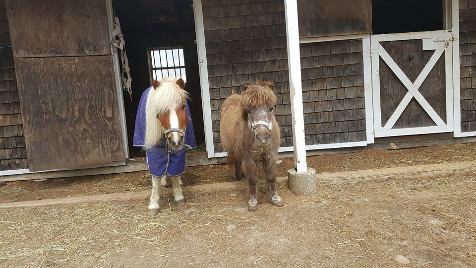 Peanut and Grandma are both available for sponsorships