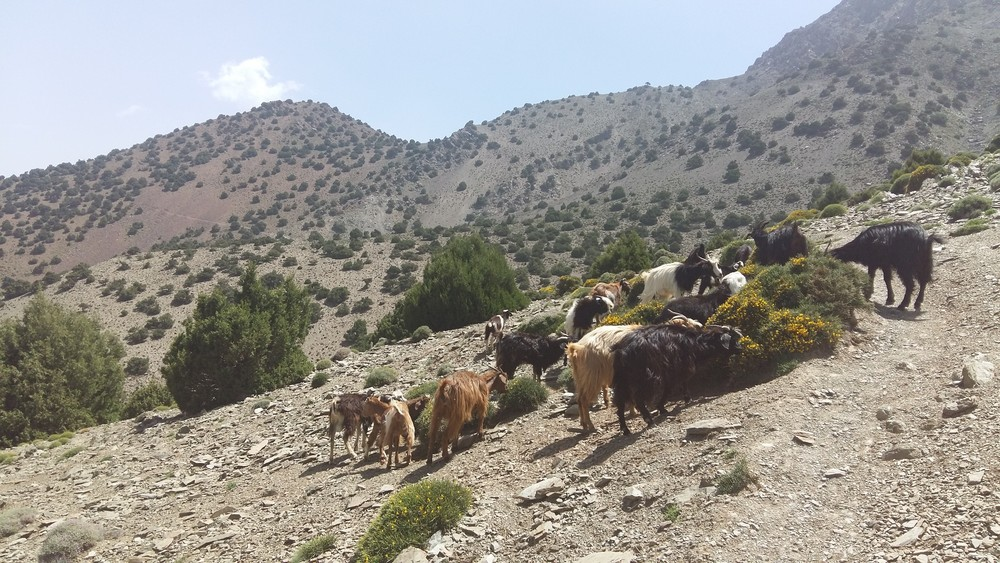 Hiking in Atlas Mountains