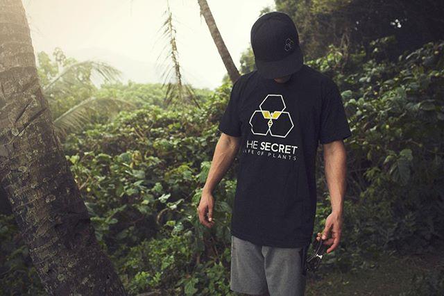 🌴 The OG tee 🌴 secretlifeca.com/shop