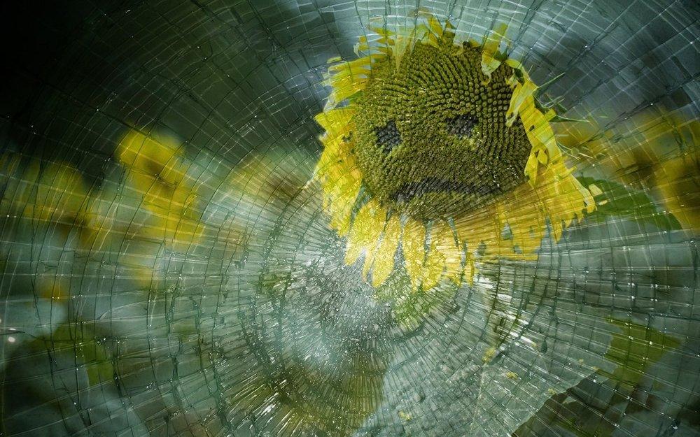 sad sunflower.jpg