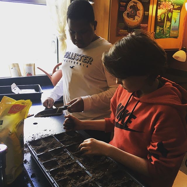 It's snowing outside but we are starting seeds inside today!  Also, thanks to inspiration from taco Thursday, we will be starting a salsa garden this year. #growyourownfood #schoolgardens #eastnashville #organic #nongmo #growsomething