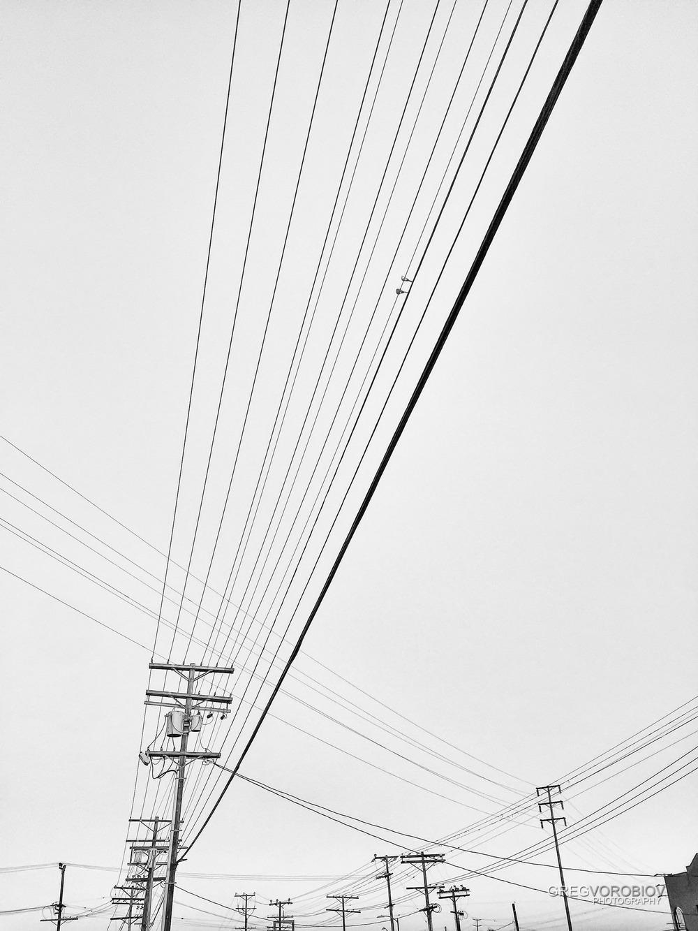 morning_dove_love_lines_by_greg_vorobiov-1.jpg