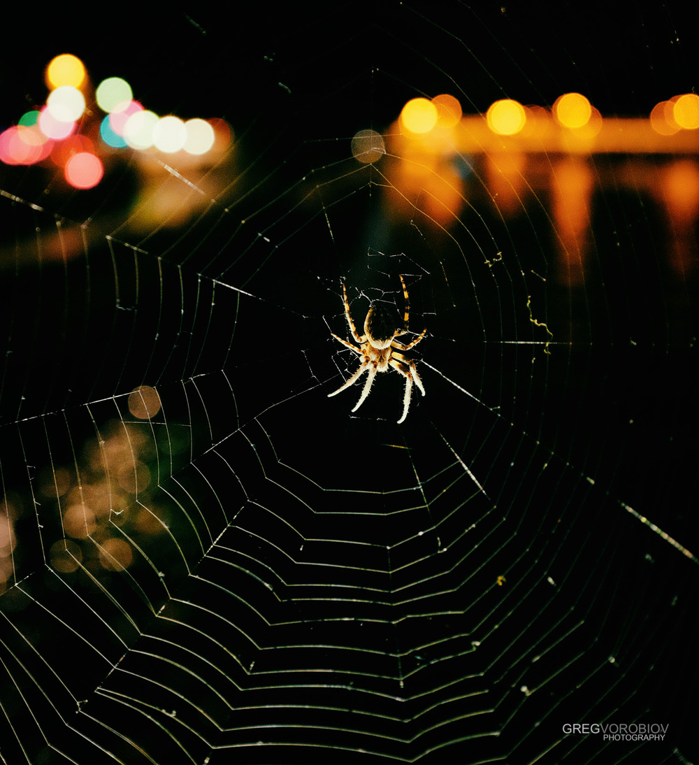 spider_notre_dame_paris_by_greg_vorobiov-1.jpg