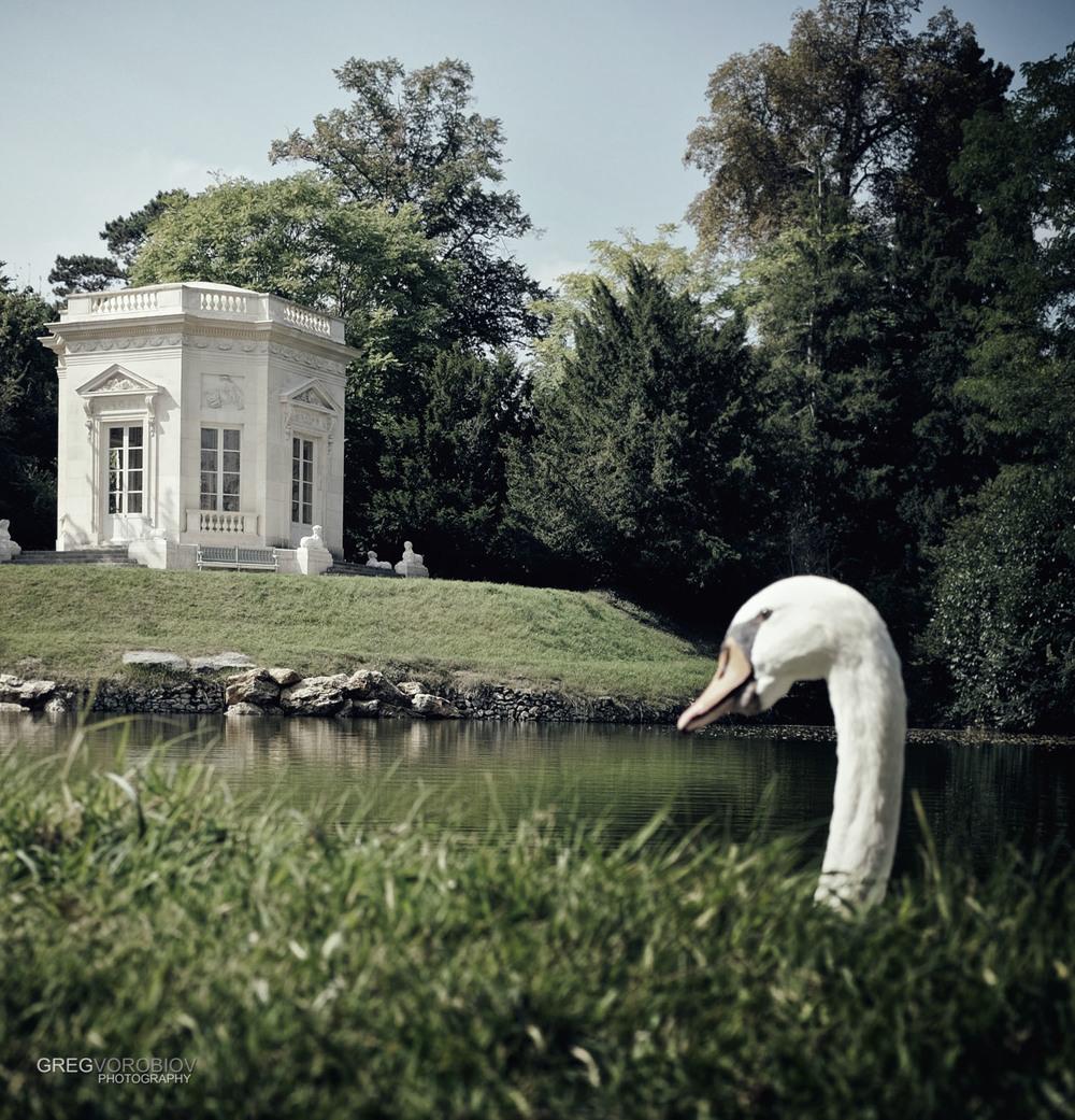 swan_palace_of_versailles_france_by_greg_vorobiov-1.jpg