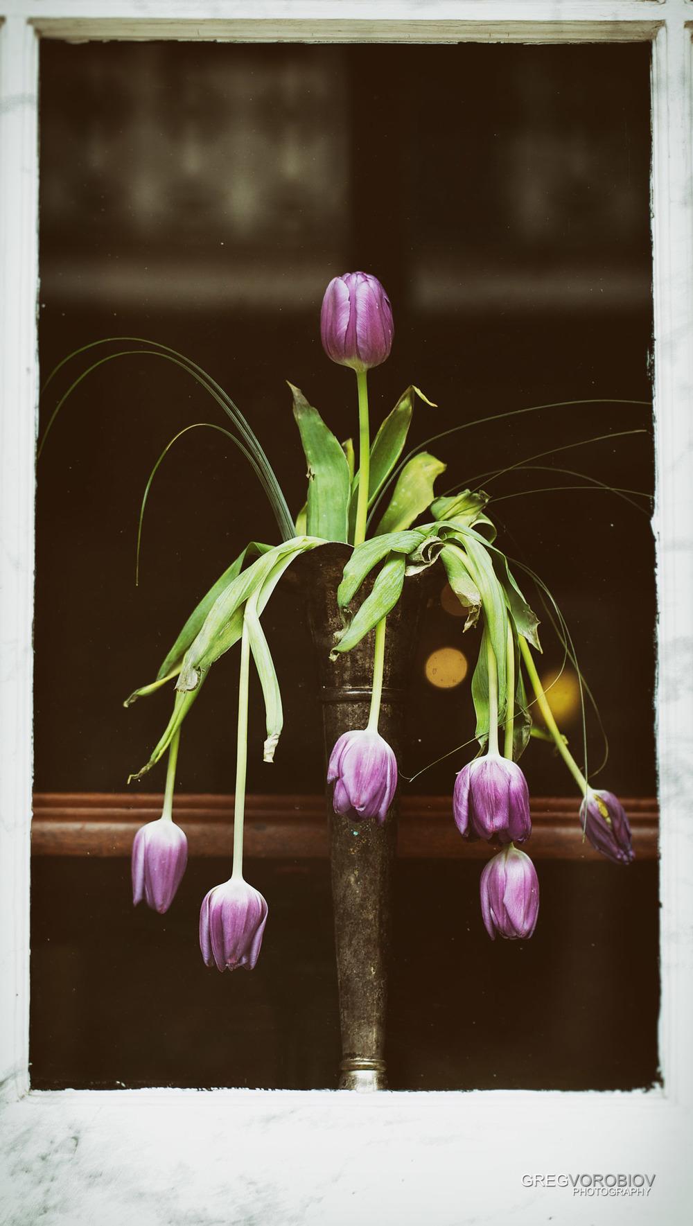 new_orleans_flowers_by_greg_vorobiov-1.jpg