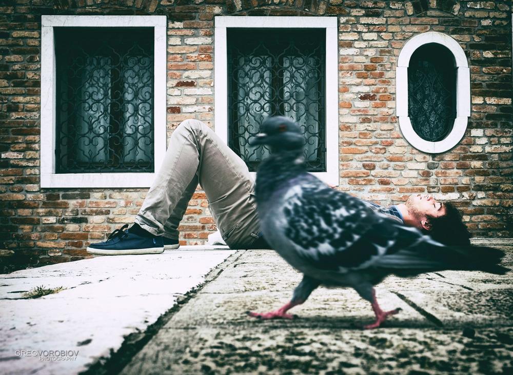 sleeping_pigeon_venice_italy_by_greg_vorobiov_1_DSCF0777 (1).jpg