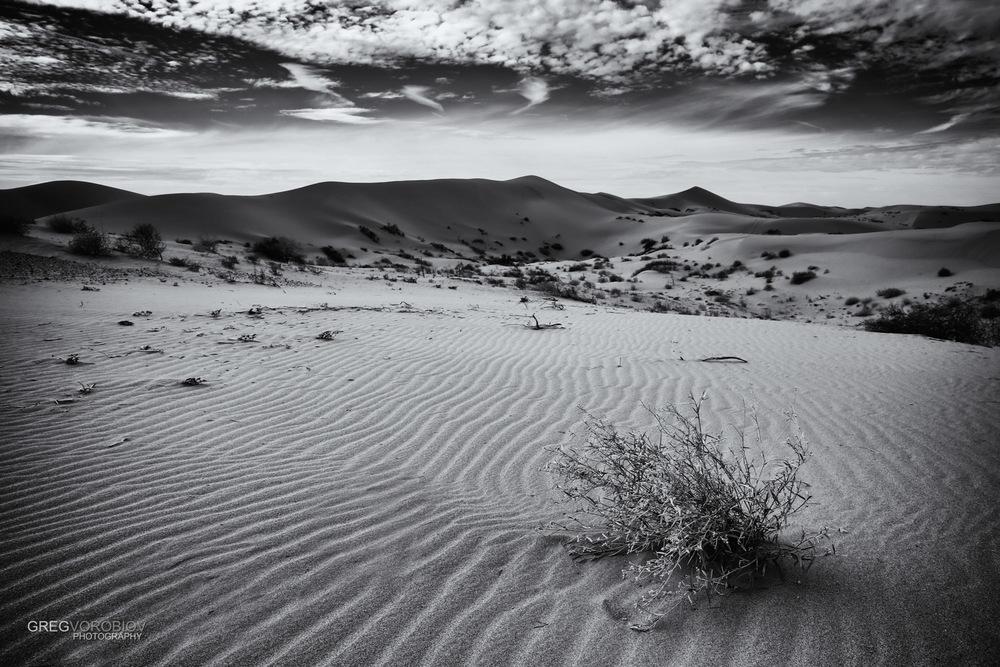 algodones_dunes_by_greg_vorobiov-1-2.jpg