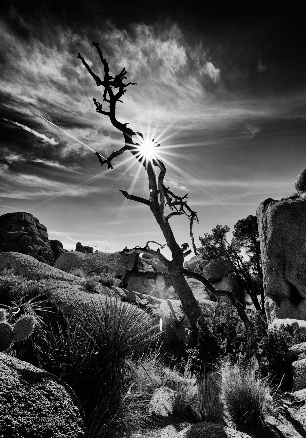 joshua_tree_by_greg_vorobiov-2.jpg