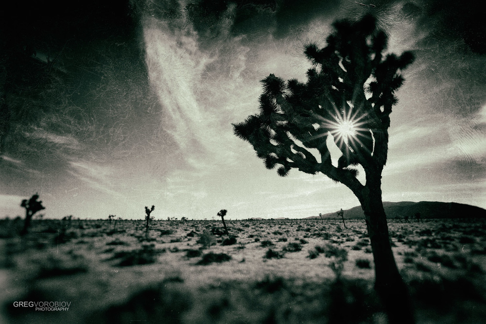 joshua_tree_by_greg_vorobiov-4.jpg