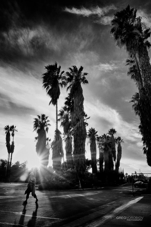 palm_trees_encino_by_greg_vorobiov-1.jpg