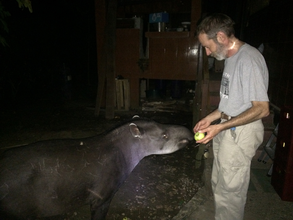 David offers an apple to a friendly Tapir. Take a look at the jaguar attack scar on its right shoulder!