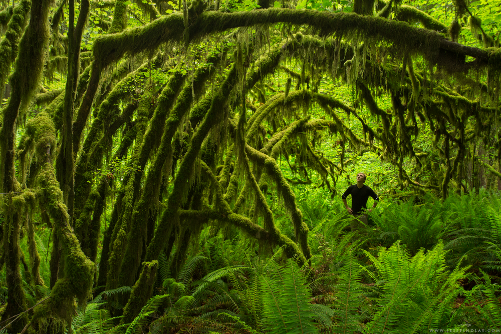 Home Temperate Rainforest, Southwestern British Columbia, Canada The temperate rainforest of the Pacific Northwest is where I've grown up. I think this self-portrait exemplifies my sense of wonder and awe for this environment. This particularly lush area, thick with sword ferns, vine maples and epiphytes, is just a half hour drive from where I live near Vancouver, British Columbia.