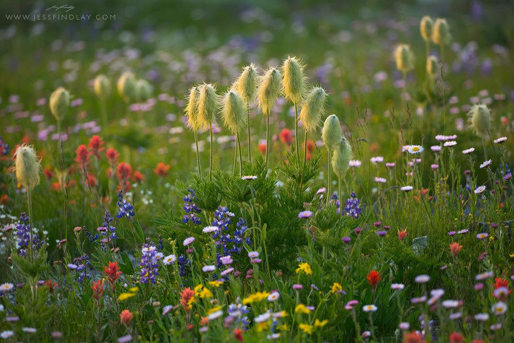 Flowers_NL.jpg