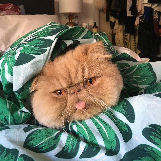 peoplemap-winstonsmushface-influencer-cats4.jpg