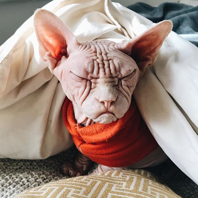 peoplemap-lokithesphynx-influencer-cats3.jpg