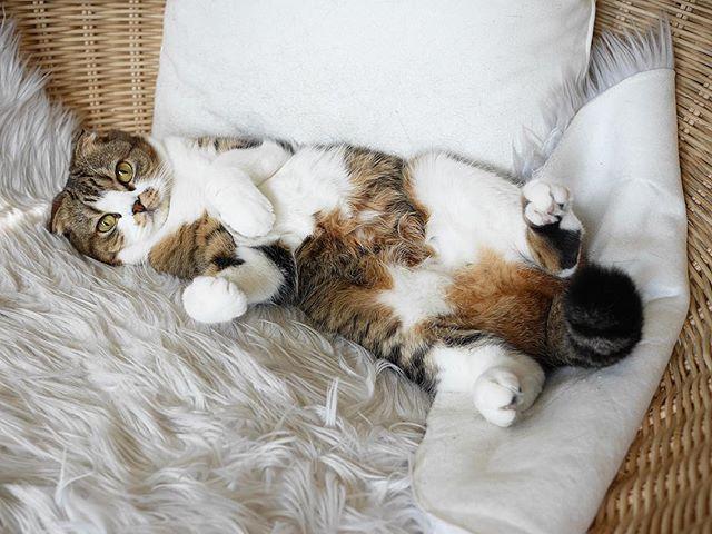 peoplemap-macchacat-influencer-cats4.jpg